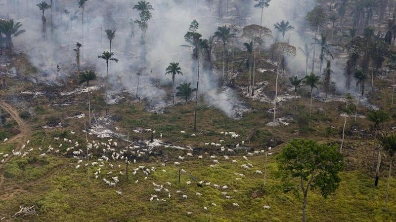 UK supermarkets warn Brazil over Amazon land bill