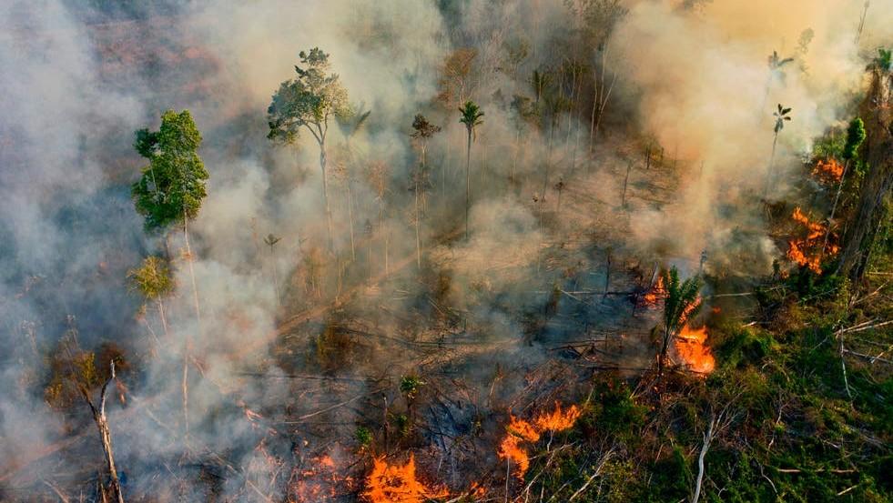 Tesco urged to drop meat suppliers over Amazon deforestation fears