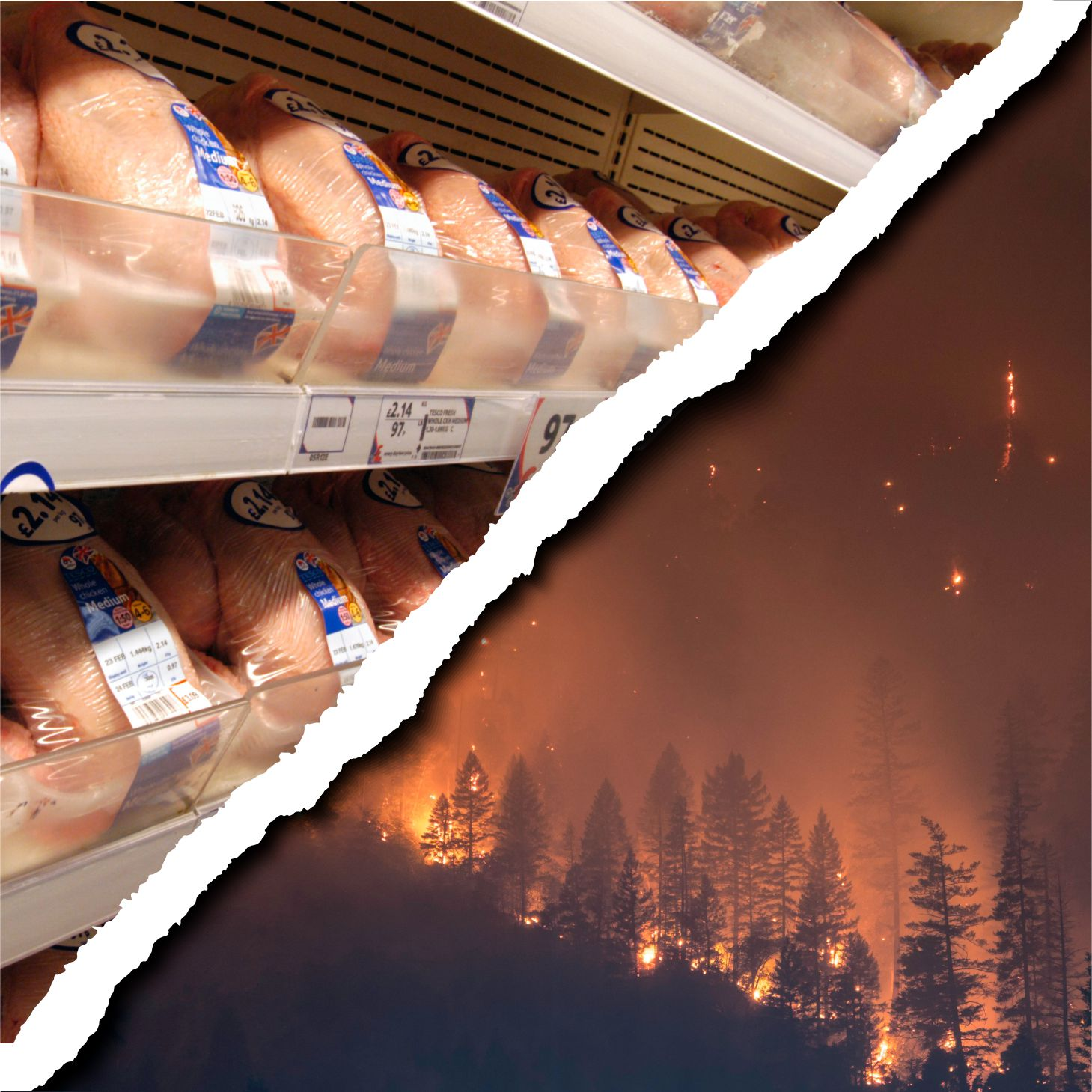 Tesco buys meat from forest-destroying JBS